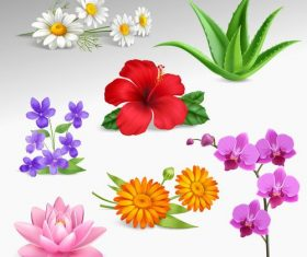 Different kinds of summer flowers vector