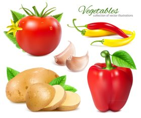 Different vegetables vector
