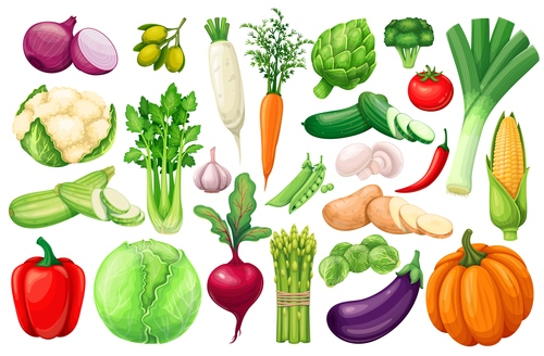 Fresh vegetable elements icons for design vector