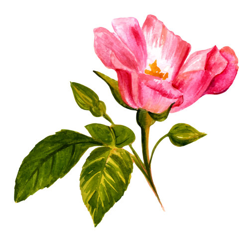 Little rose watercolor illustration vector