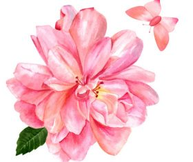 Pink rose watercolor illustration vector
