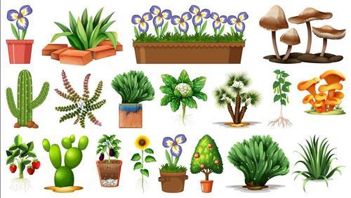 Plant flower pot background vector