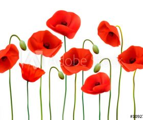 Poppy flower background vector