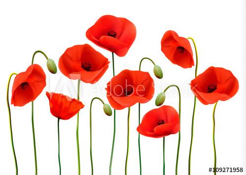 Poppy flower background vector