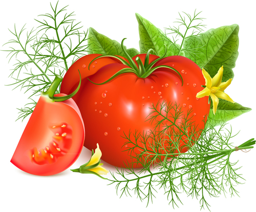 Realistic tomatoes background vector