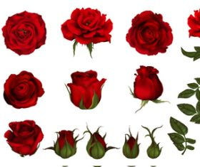 Rose and bud background vector