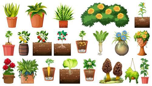 Set different plants pots background vector