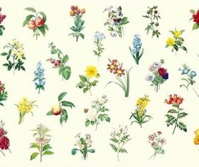 Set of beautiful blooming wildflowers vector