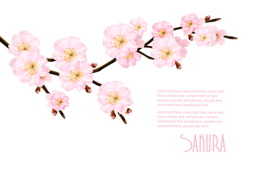 Abstract background with blossom branch sakura vector