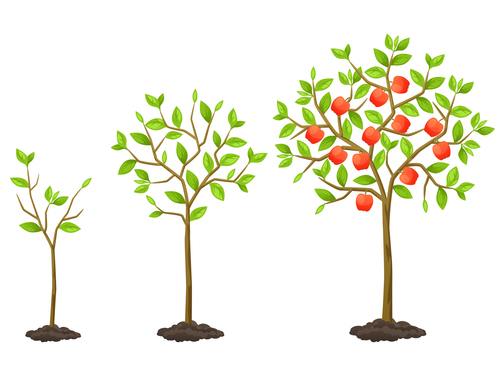 Apple tree growth process vector