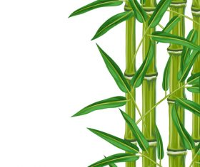 Bamboo watercolor painting vector on white background
