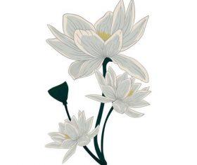 Chrysanthemum flower watercolor painting vector