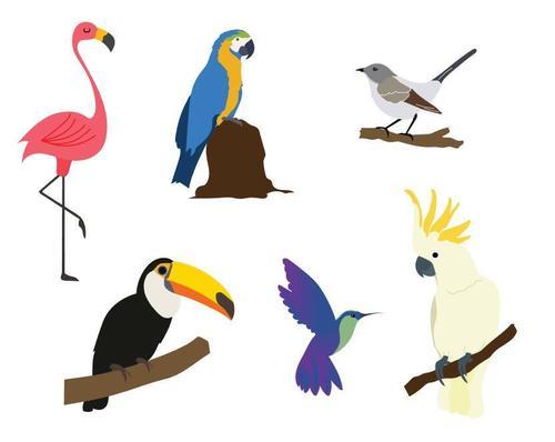 Exotic tropical birds vector