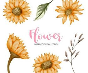 Flower watercolor collection vector