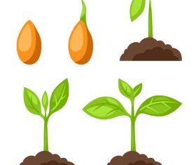 Growth process illustration vector
