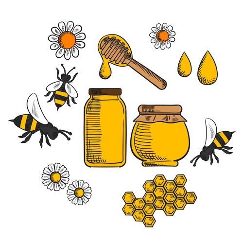 Hand drawn bee and honey background vector