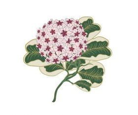 Hydrangea watercolor painting vector
