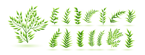 Natural green herb leaves vector