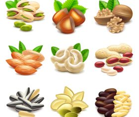 Nuts icons realistic vector set