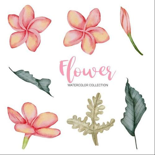 Painting watercolor flower collection vector