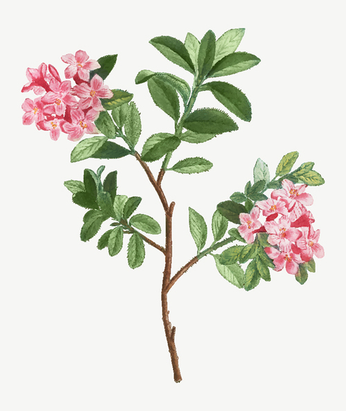 Pink flowers watercolor painting background vector