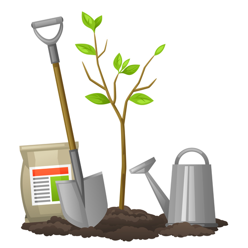 Planting apple tree vector