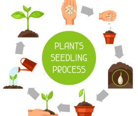 Plants seedling process vector