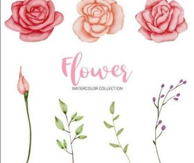 Rose flower watercolor painting vector
