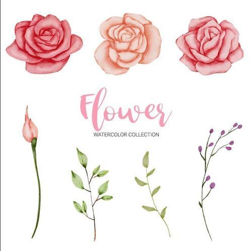 Rose flower watercolor painting vector