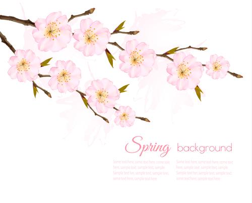 Spring background with pink sakura vector
