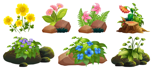 Stones and flowers vector