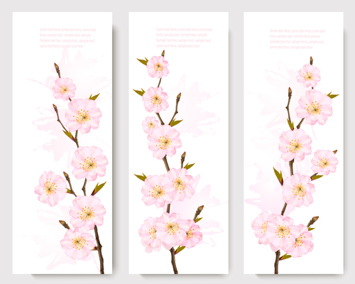 Three spring banners with pink sakura vector