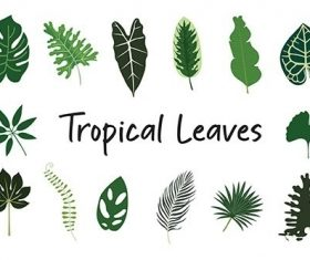 Tropical Leaves Hand Drawn