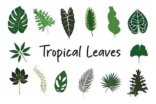 Tropical Leaves Hand Drawn
