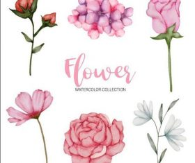 Various flowers watercolor collection vector