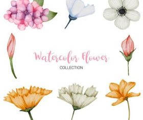 Watercolor flower collection vector