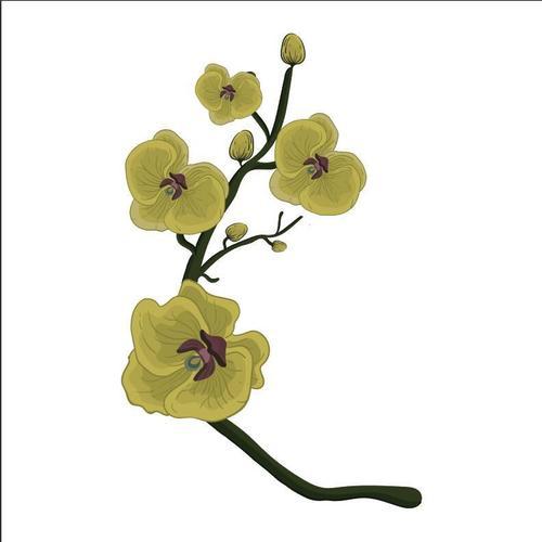 Yellow flower illustration vector