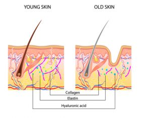 Young skin vector