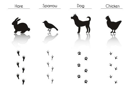 Animal literacy table vector