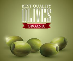 Best quality olive vector