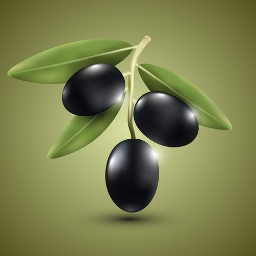 Black olive vector