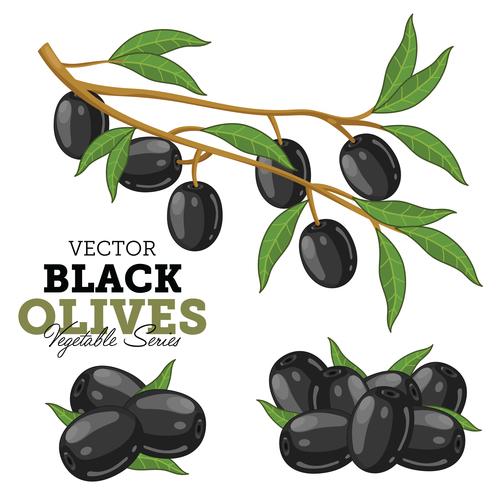 Black olives background vector