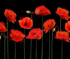 Bright-coloured poppies vector