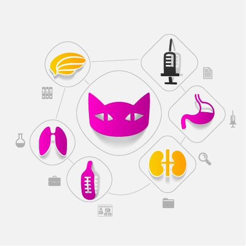 Cat sticker infographic vector
