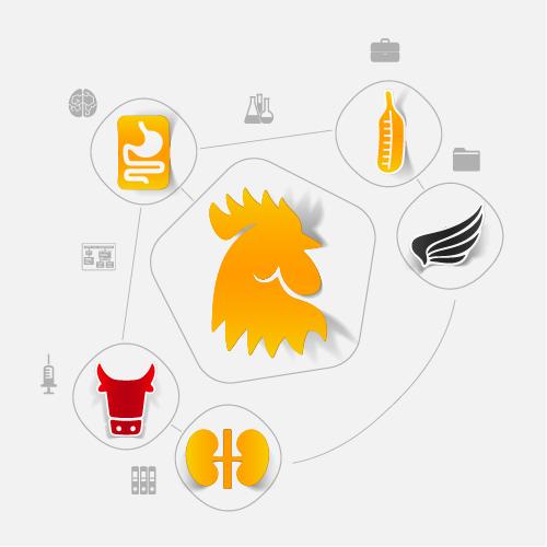 Chicken sticker infographic vector