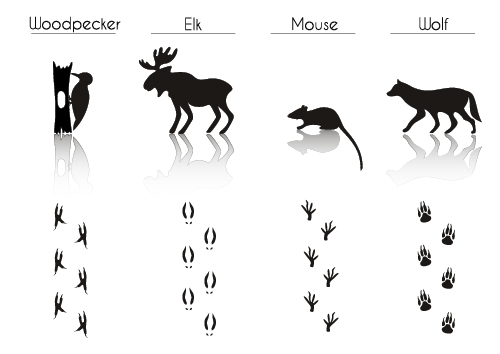 Different animal literacy table vector