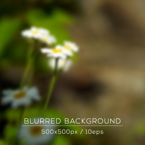 Fresh chamomile blurred background vector