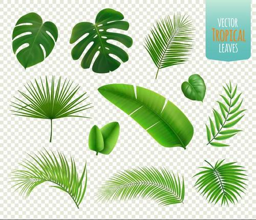 Plant leaf vector