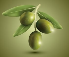Realistic olive vector