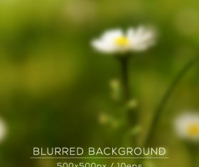 Spring daisy background vector